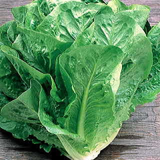 Green Towers Lettuce Seeds