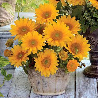 Vincents Fresh Sunflower Seeds