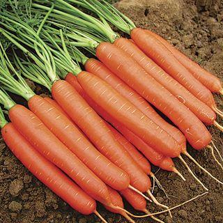 Romance Hybrid Carrot Seed Tape