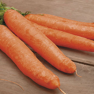 Little Finger Carrot Seed Tape