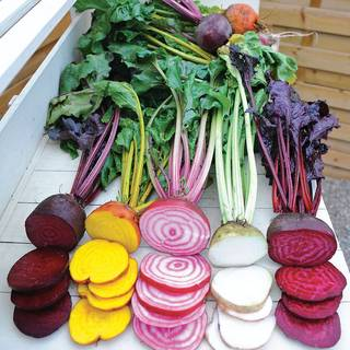 Rainbow Mix Beet Seed Tape