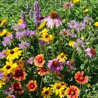 Native Perennial Seed Mixture