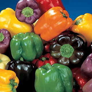 Sweet Rainbow Mix Pepper Seeds