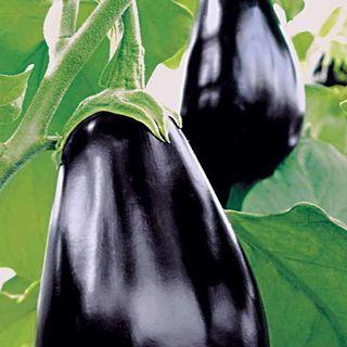 Amadeo Eggplant Seeds