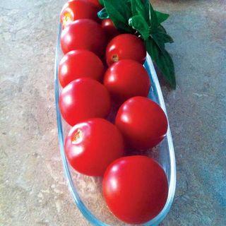 Mountain Magic Hybrid Tomato Seeds