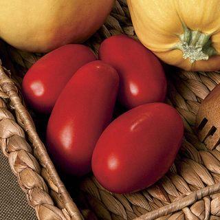 Supremo Hybrid Tomato Seeds
