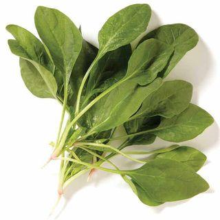 Spinach Novico Hybrid