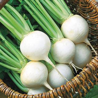 White Ball Hybrid Turnip Seeds