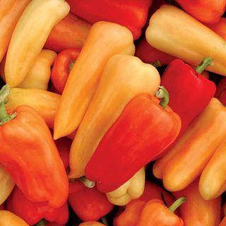 Chablis Hybrid Pepper Seeds