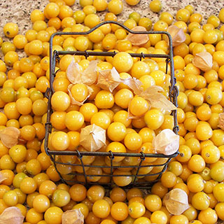 Aunt Mollys Ground Cherry Organic Seeds