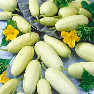 Crystal White Pickler Hybrid Cucumber Seeds