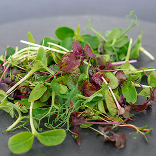 Rainbow Mix Microgreens Seeds