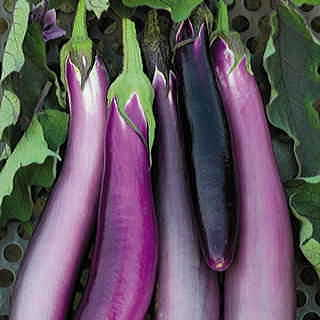 Comet Purple Hybrid Eggplant Seeds