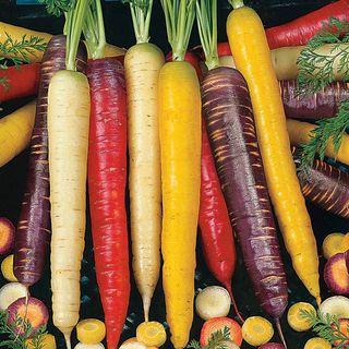 Rainbow Blend Carrot Seeds