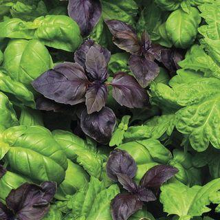 SimplyHerbs™ Try Basil Seeds