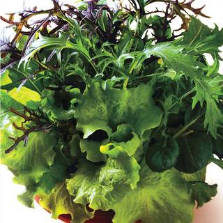 Simply Salad Global Gourmet Mix Seeds