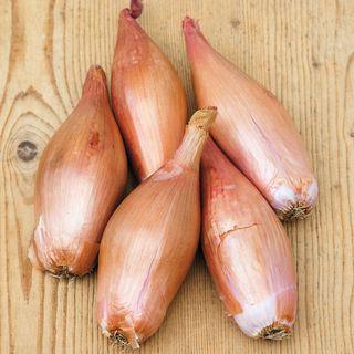 Zebrune Shallot Seeds