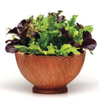 Simply Salad Alfresco Mix Seeds