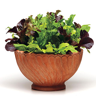 Simply Salad Alfresco Mix Seeds