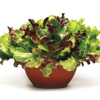 Simply Salad Summer Picnic Mix Seeds