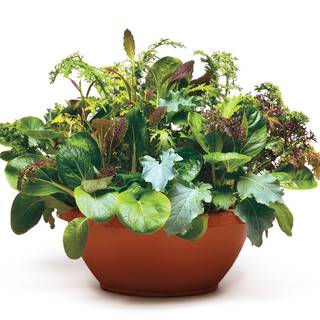Simply Salad Wonder Wok Mix Seeds