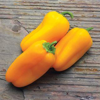 Yellow Sparkler Hybrid Pepper Seeds