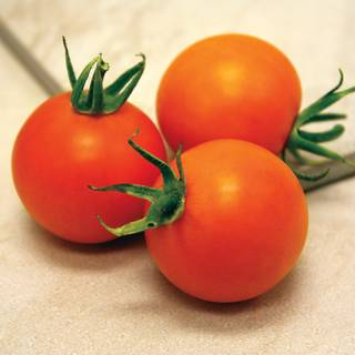 Bellini Hybrid Tomato Seeds