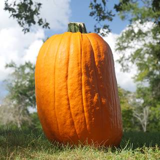 Dickinson Organic Pumpkin Seeds