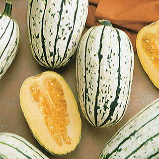 Delicata Organic Winter Squash Seeds
