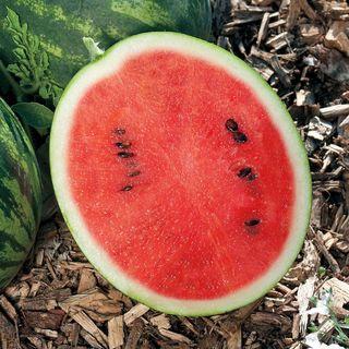 Mini Love Hybrid Watermelon Seeds Image