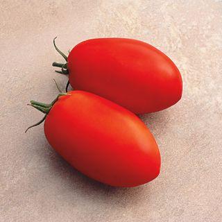 Optimax Hybrid Tomato Seeds