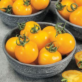 Egg Yolk Tomato Seeds