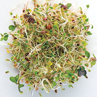 Salad Mix Hybrid Sprouting Seeds