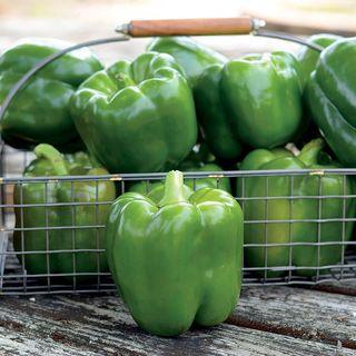 Parks Whopper II Hybrid Bell Pepper Seeds