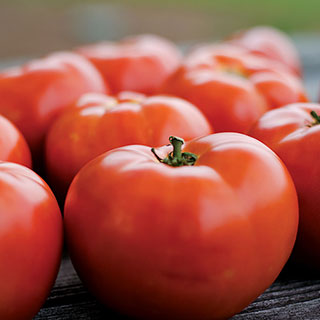 Parks Legacy Tomato Seeds