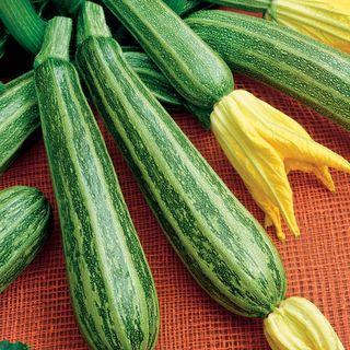 Gadzukes Hybrid Squash Seeds