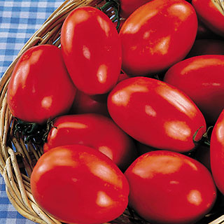 San Marzano OrganicTomato Seeds