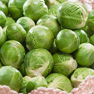 Catskill Brussels Sprouts Seeds