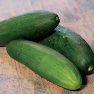 Cucumber Parks Whopper II Hybrid
