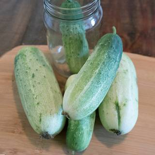 Garden Bush Pickle F1 Cucumber Seeds