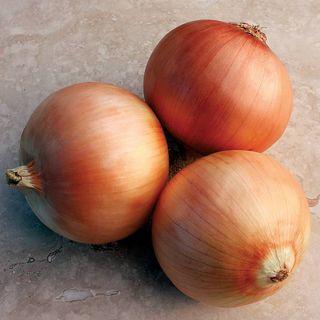 Onion Great Western