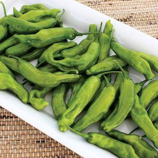 Takara Hybrid Pepper Seeds