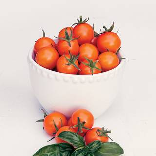 Sun Gold Hybrid Cherry Tomato Seeds