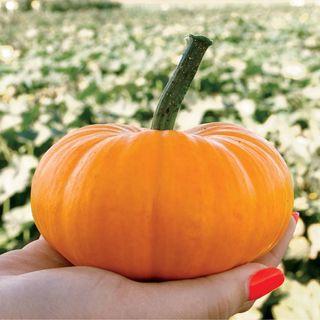 Bumpkin Hybrid Pumpkin
