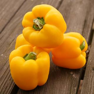 Parks Whopper Hybrid Yellow Bell Pepper Seeds