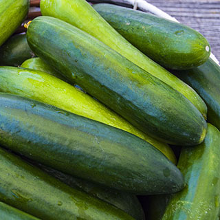 Paraiso Organic Cucumber Seeds