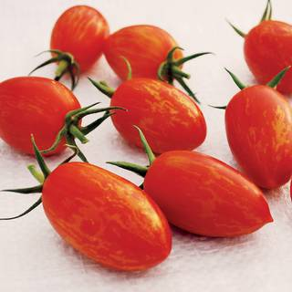 Red Torch Tomato Seeds