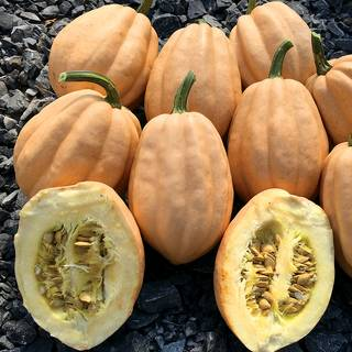 Winter Squash Baked Potato Seeds