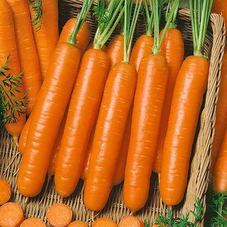 Carrot Little Finger Organic Seeds Image