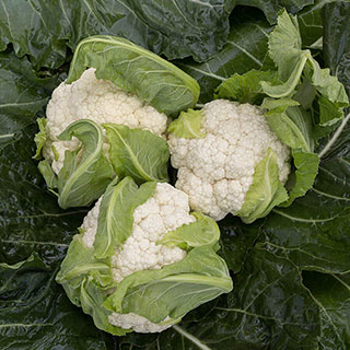 Skywalker Organic Cauliflower Seeds Image